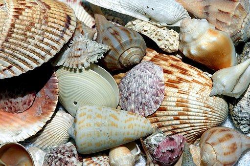 sea-shells-1886613__340
